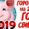 год-Свиньи-god-svinii